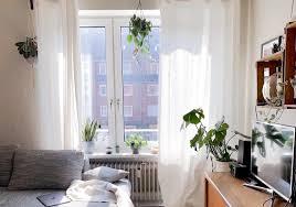 5 zimmerpflanzen für das südfenster pilea pergé dein