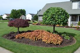 Huechera And Lavender Twist Weeping Redbud Used In An Island Planting