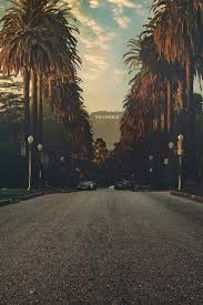 Palm Trees And The Hollywood Sign Sitting Atop Hills Los Angeles