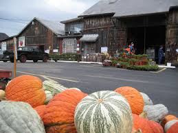 Southern Ohio Pumpkin Patches by Hidden Valley Fruit Farm In Lebanon Oh A Family Tradition