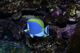poisson eau douce aquarium tropical l aquarium d eau de mer tropicale