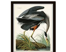 Vintage Audubon Blue Heron Bird Print Giclee Art Poster Nautical
