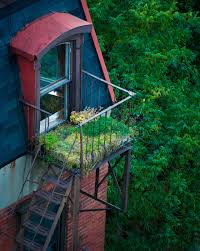 Urban Garden on Fire Escape