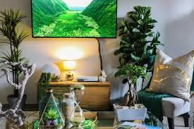 besseres raumklima 10 rabatt auf luftreinigende pflanzen