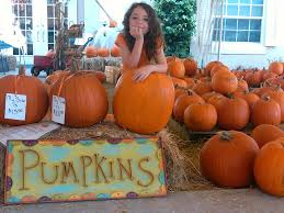 Pumpkin Patch Tampa by Life Run Dmt Page 76