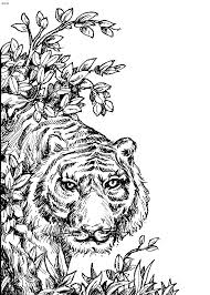 Marvellous Inspiration Tiger Animal Coloring Pages Free Jumps Page Printable VoteForVerdecom
