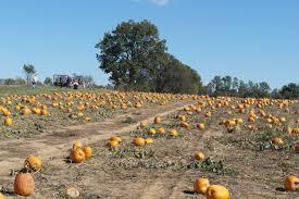 Pumpkin Patch Near Cincinnati Ohio by Bi Water Farm Pumpkin Patch Georgetown Ky Bright On A Budget