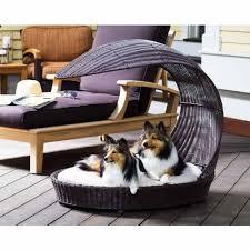Fancy Dog Beds Amazon