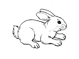 Coloring Pages Animals Gianfreda