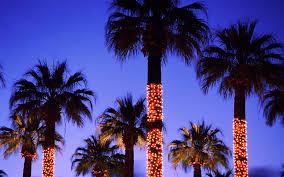 Christmas Palm Tree Wallpaper
