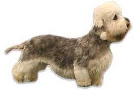 No Shed Small Dogs by 29 Small Non Shedding Dog Breeds