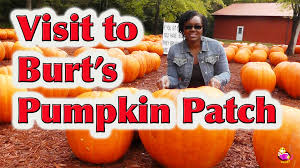 Pumpkin Farms In South Georgia by Field Trip To The Pumpkin Patch Littlestorybug Youtube