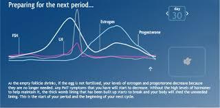 Shedding Of The Uterine Lining Is Called by Ovulation U2013 Understanding Ovulation