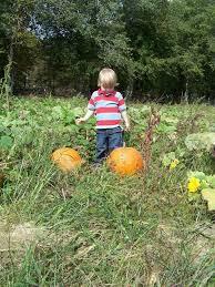 Pumpkin Picking Nj 2015 by The Mccann Farm Corn Maze U0026 Pumpkin Patch New Jersey Haunted Houses