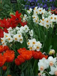 garden ideas best bulbs to plant in flower bulbs