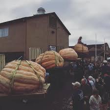South San Jose Pumpkin Patch by Massive 1 910 Pound Pumpkin Claims Top Prize In Legendary Half