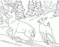 Coloring Pages Animals Free Animal Freeart39s