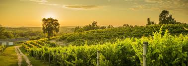Jolly Pumpkin Traverse City Weddings by This Summer Enjoy The Many Wineries Vineyards And Festivals