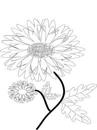 Marigolds Flower Coloring Pages 2