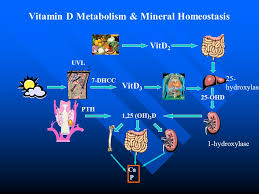 rickets of vitamin d deficiency ppt video online download