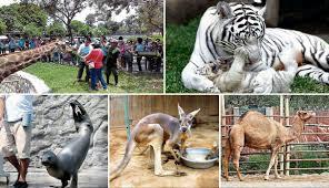 Ravensburger Niños Divulgación 47 Años En El Zoológico Activo
