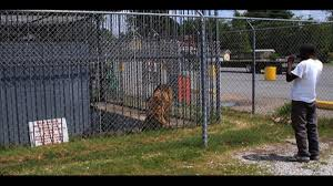 Petition · John Bel Edwards: Convince Michael Sandlin To Give Tony ... 45 Tiger Truck Stop Trucker Jims Truckin Journey Youtube The Is Here To Stay Vice Kept At Iberville Parish Truck Stop Dies Tony The Update Owner Plans Pursue Another Tiger Stuff For Free Jobyronkuhnercom Kept At For 17 Years Dies But Legal Battle Isn September 28 2015 2 Louisiana Cdllife Abandoned Sign Along I2 Flickr