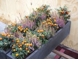 comment réussir potager en carré sur un balcon mon jardin