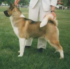 Non Shedding Large Dogs by The Most Popular Large Dog Breeds And How To Care For Them