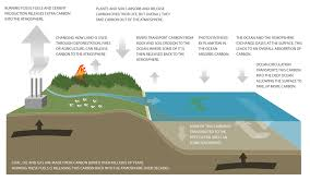 Define Carbon Sink Geography by Simple Definition Of Carbon Sink Sinks Ideas