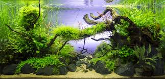 Planted Tank Old River By Sven Pohle - Aquascape Awards ... Adrie Baumann And Aquascaping Aqua Rebell Natural Httpwwwokeanosgrombgwpcoentuploads2012 Amazoncom Aquarium Plant Glass Pot Fish Tank Aquascape Everything About The Incredible Undwater Art Outstanding Saltwater Designs Photo Ideas Anubias Nana Petite Planted Freshwater Beautify Your Home With Unique For Large Fish Monstfishkeeperscom Scape Nature Stock 665323012