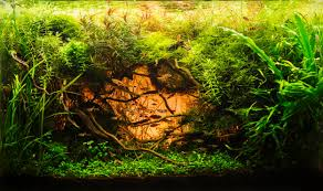 Beautiful Aquascape (The Art Of The Planted Aquarium) ENCREST 4min ... An Inrmediate Guide To Aquascaping Aquaec Tropical Fish Most Beautiful Aquascapes Undwater Landscapes Youtube 30 Most Amazing Aquascapes And Planted Fish Tank Ever 1 The Beautiful Luxury Aquaria Creating With Earth Water Photo Planted Axolotl Aquascape Tank Caudataorg 20 Of Places On Planet This Is Why You Can Forum Favourites By Very Nice Triangular Appartment Nano Cube Aquascape Nature Aquarium Aquascaping Enrico A Collection Of Kristelvdakker Pearltrees