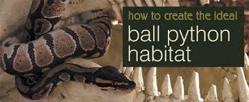 how to create the ideal ball python habitats