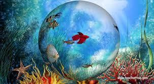 telecharger aquarium d gratuit pour pc fonds d cran anim