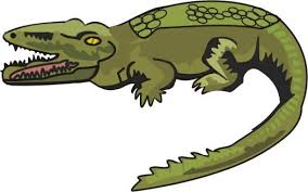 Animals Name Coloring Pages Alligator