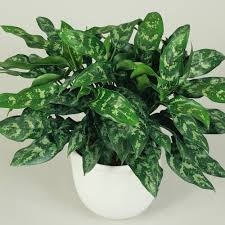 Best Pot Plant For Bathroom by Best Low Light Houseplants Sunset