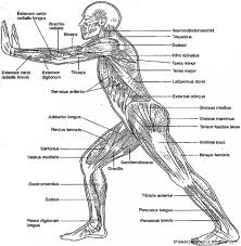Watch Best Anatomy And Physiology Coloring Workbook Chapter 10 Answers