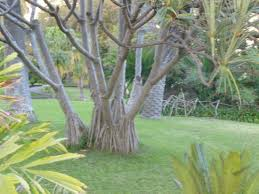 public park in historic QUINTA MAGNOLIA free entry Review of