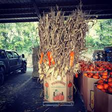 Johnson Brothers Pumpkin Patch Christmas Trees by Graves Farms Home Facebook
