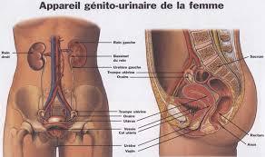 interieur corps humain femme interieur corps humain femme 28 images anatomie compar 233 e