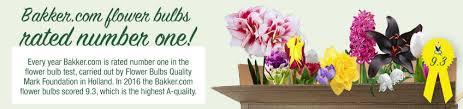 buy flower bulbs bakker