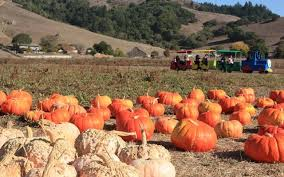 Pumpkin Patch Santa Rosa by Have A Pumpkin Patch Birthday Party This Fall Marin Mommies