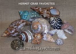 Do Hermit Crabs Shed Their Legs by Hermit Crab Shell Selection