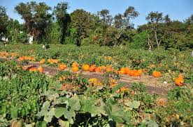 Pumpkin Picking Places In South Jersey by Atlantic Farms 1506 Atlantic Ave Manasquan New Jersey 08736