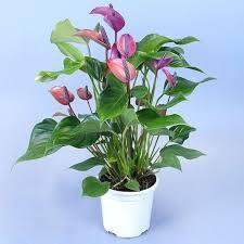 plante d駱olluante bureau 107 best plantes dépolluantes images on gardening