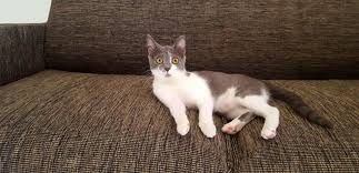 cat sofa protection for sofas and armchairs cat friendly sofa