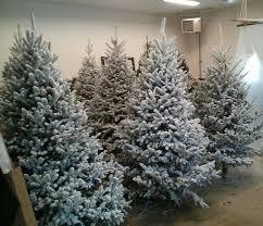 Balsam Christmas Trees Real by Carlson Tree Farm