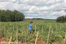 Pumpkin Picking Nj by Favorite Apple U0026 Pumpkin Picking Spots In Ny U0026 Nj Gone Travel