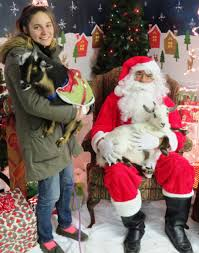 Christmas Tree Shop Middletown Ny by Pictures With Santa Middletown Humane Societymiddletown Humane