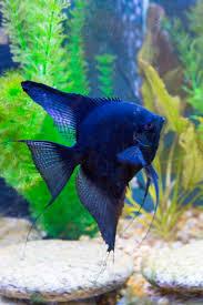 Petco Flower Ball Aquarium Decor by Best 25 Freshwater Aquarium Fish Ideas On Pinterest Freshwater