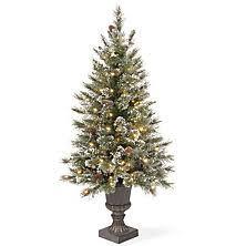 Plantable Christmas Trees Columbus Ohio christmas trees sam u0027s club